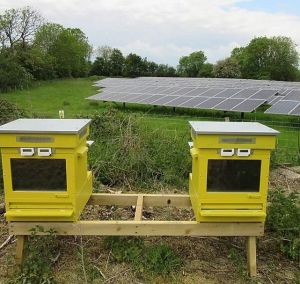 Beehives and solar panels